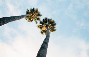 Palms.