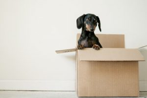 a dog in a moving box