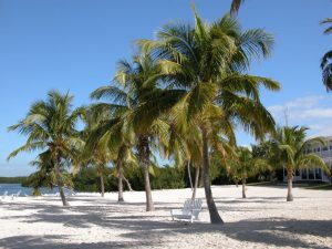 Palm trees on a beach during daytime.