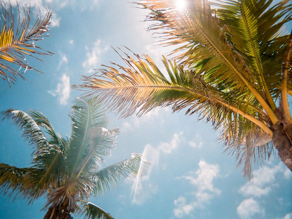 Sunlight beaming through palm trees, representing Florida winter vacation ideas.