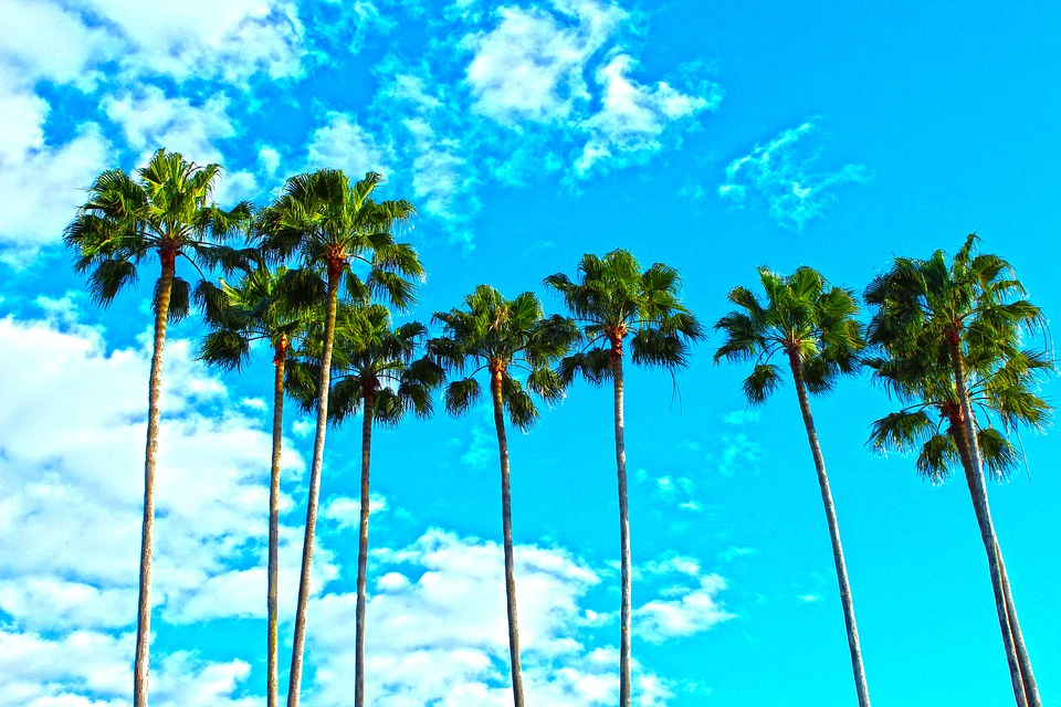 Palm trees to look at after moving to Oakland Park.