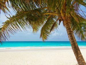 A palm tree near a white sandy beach, with clear skies.