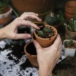 prepare your plants for Florida relocation