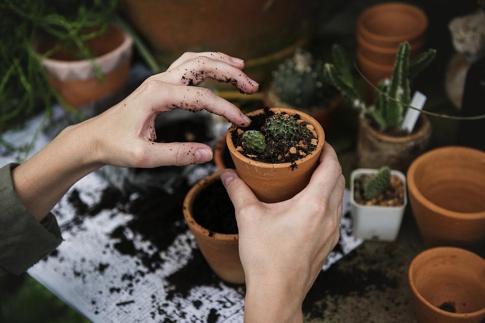 prepare your plants for Florida relocation
