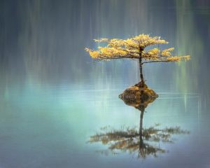 A tree on a lake.