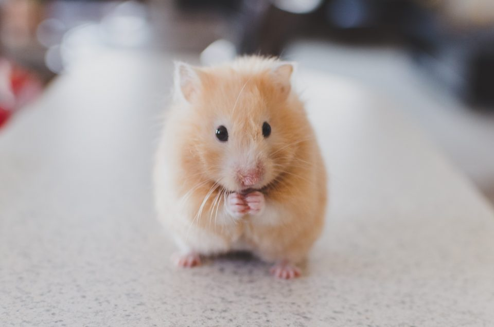 Image of a very cute mouse