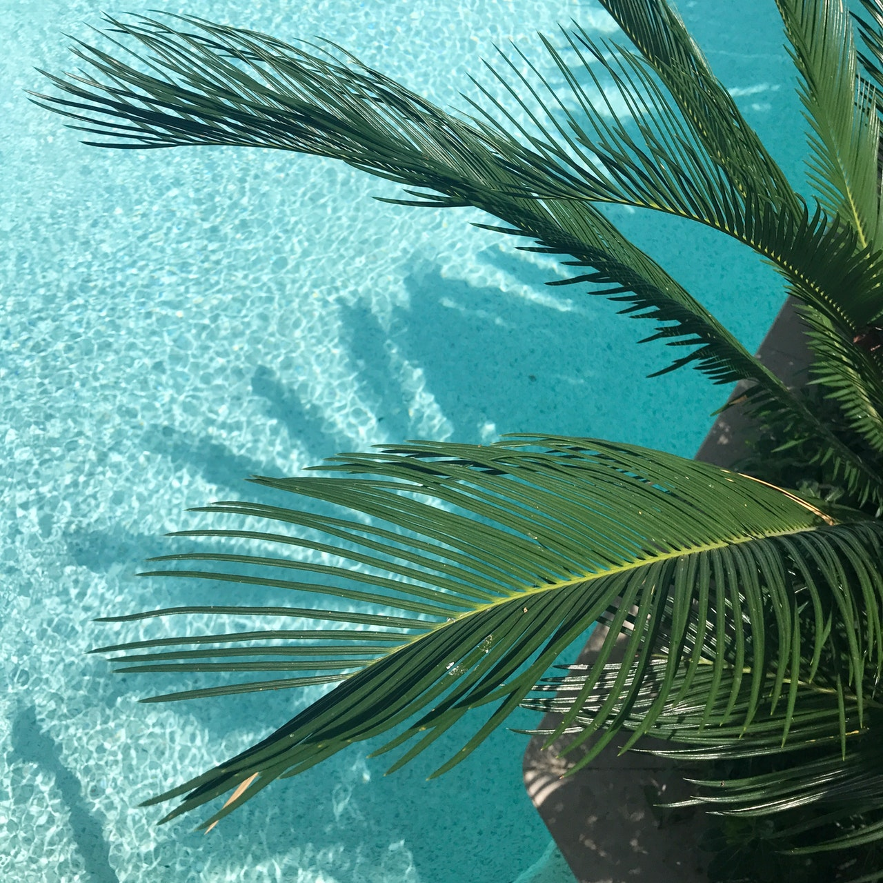 a palm tree over water