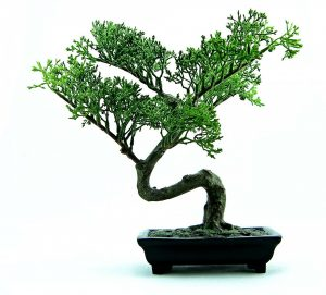 bonsai tree is one of the prohibited items your movers will not move