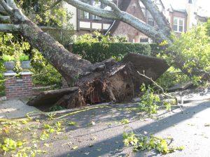 Ripped tree
